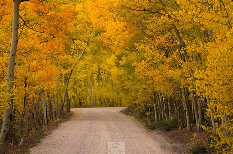 5 GREAT places to see the fall colors in Colorado right