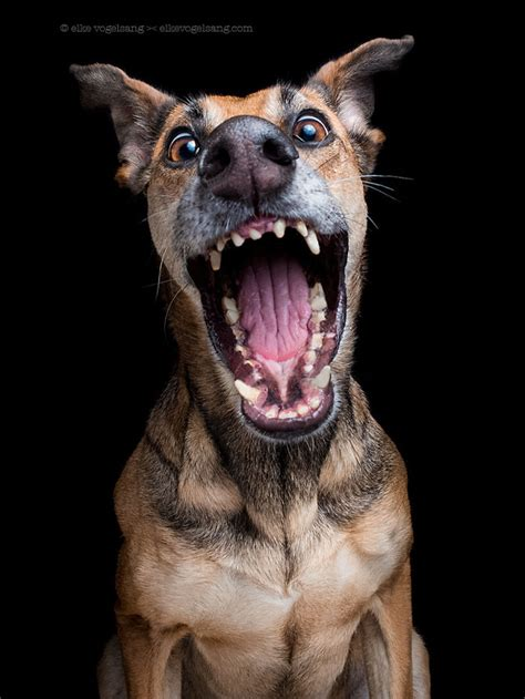 Charmingly facial expressions of photographer's dogs